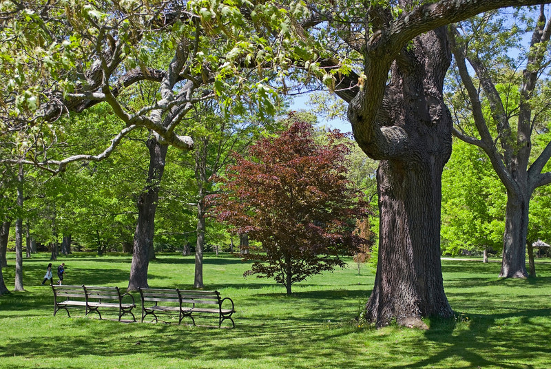 """Spring Walk in Park""<br /> Sunny day park scene in Long Island, New York."