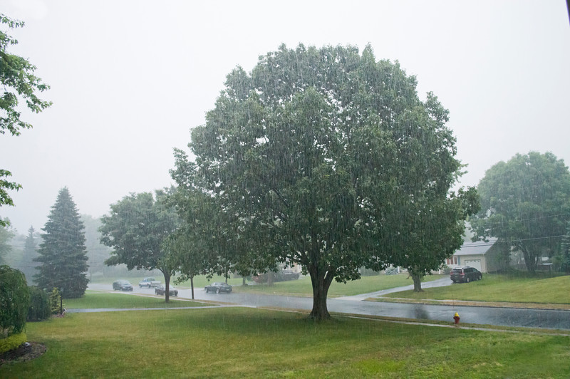 """Summer Rain""<br /> <br /> A Summer down pour in Manalapan, New Jersey."