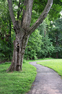 Wooded Summer Path
