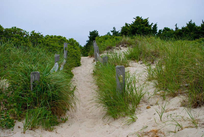 """Beach Trail Cape Cod""<br /> A trail leading to a quiet beach on Cape Cod, Massachusetts."