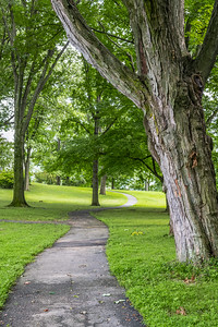 Tree Trunk and Path