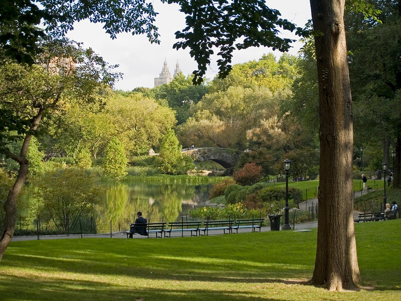 """""""Central Park View""""<br /> A scenic view of the pond in Central Park in Manhattan."""