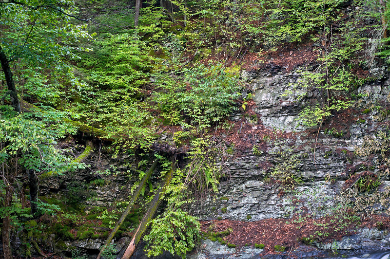 """Summer Rock Wall""<br /> <br /> A stone wall in the Pocono Mountains of Pennsylvania during Summer."