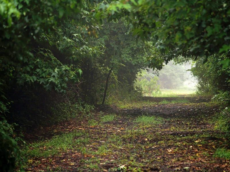 Framed Summer Woods<br /> <br /> A path through dense Summer woods in New Jersey.