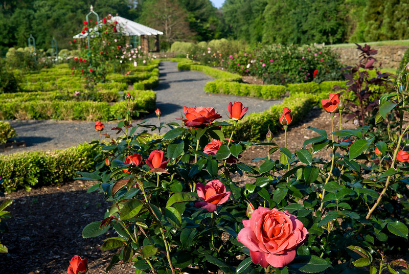 A view of the rose garden in Deep Cut Park, Middletown, NJ.