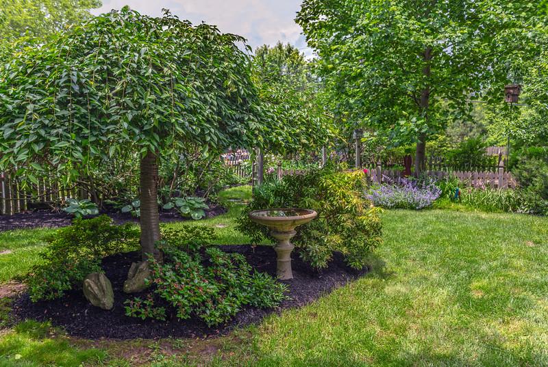 Summer Green Garden