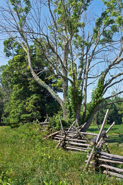 A Summer landscape in Monmouth Battlefield State Park in New Jersey.