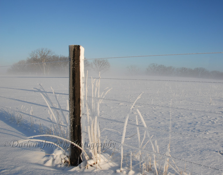 Frosty Early Morning
