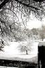 Snow Scene in Denver, Park