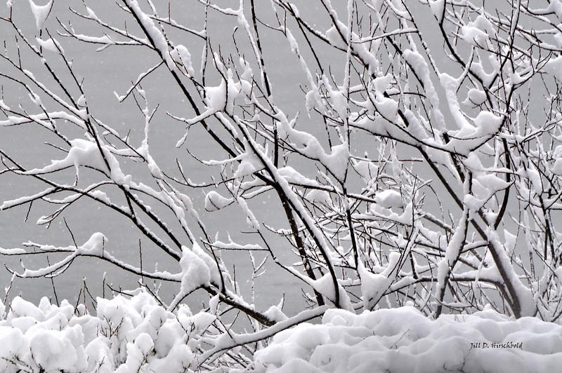 145_SnowBranch
