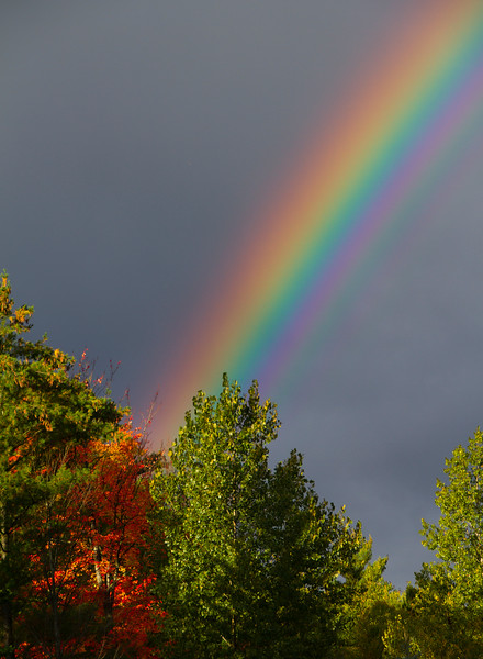 The Rainbows End