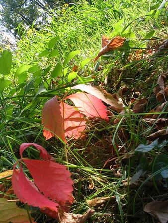 Fall, '07