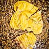 Perazzo Meadows gold