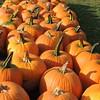 2016-Fall Harvest-4