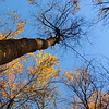 2016-Fall Colors-Looking Upwards-2