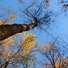 2016-Fall Colors-Looking Upwards-2