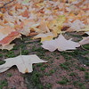 2016-Fall Colors-Fallen Leaves-3