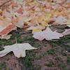 2016-Fall Colors-Fallen Leaves-3