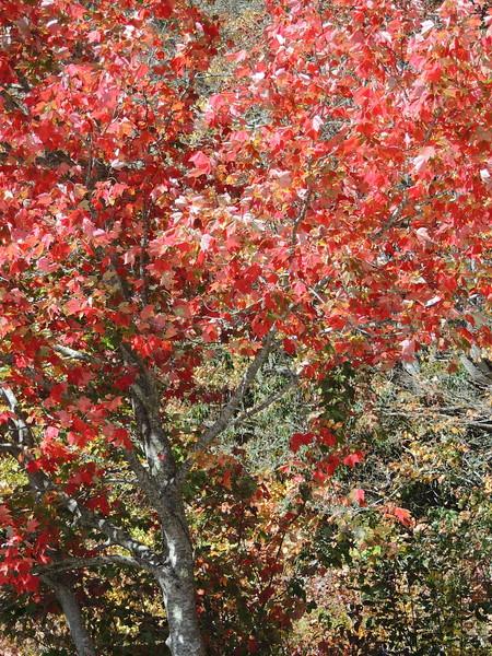 2016-Fall Colors-9