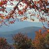 Fall Window Thru the Trees