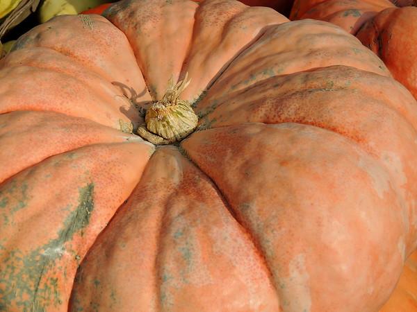2016-Fall Harvest-5