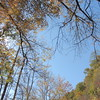 2016-Fall Colors-Looking Upwards-4