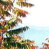 Smokey and Blue Ridge Fall - 4