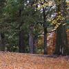 2016-Fall Colors-Fallen Leaves-1