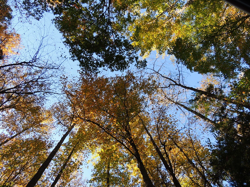2016-Fall Colors-Looking Upwards-3