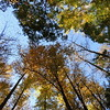 2016-Fall Colors-Looking Upwards-3