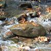 Leaves on Stream