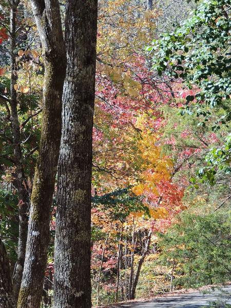 2016-Fall Path-2