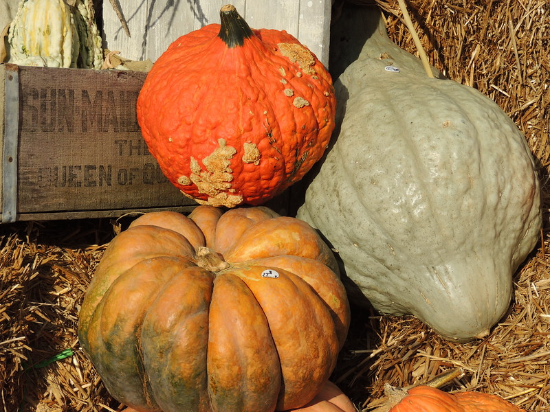 2016-Fall Harvest-1