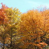 The Wonder of Fall