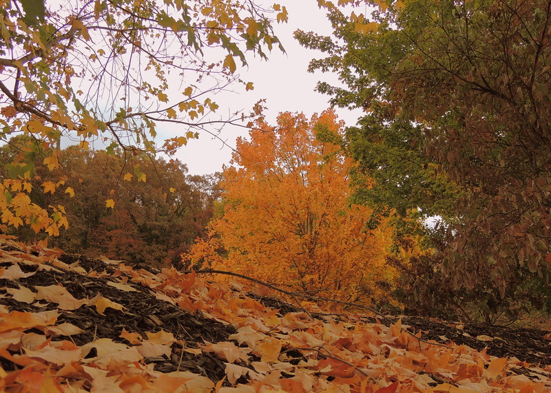 2016-Fall Colors-Fallen Leaves-5