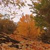 2016-Fall Colors-Fallen Leaves-5
