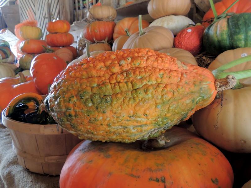 2016-Fall Harvest-2