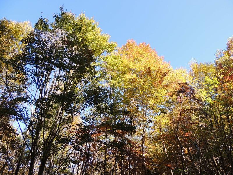 Smokey and Blue Ridge Fall - 1