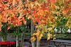 Fall in Nederland