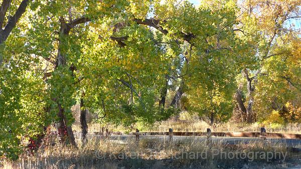 Goldsmith Gulch Trail, Bible Park, Denver, Colorado