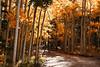 Kenosh Pass Fall Colors