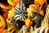 Squash Fall Harvest