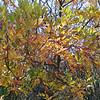 Fall colors at Kensington Metropark in Brighton, Michigan