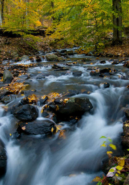 Fall leaves and rushing stream at Amicalola