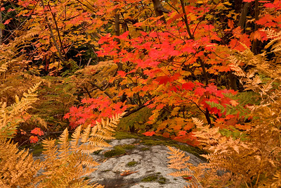 Fall colors 011
