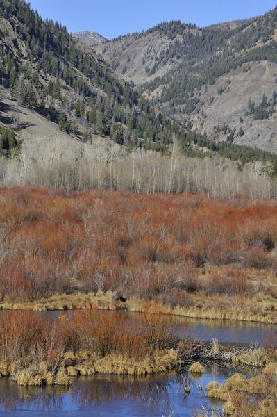 Along Trail Creek Road