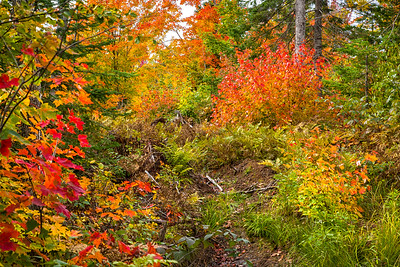 Forest floor colors near Gratiot Lake
