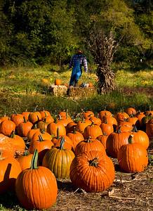 Pumpkin patch in North Carolina