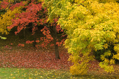 Fall colors 001