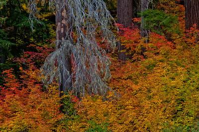 Fall colors 014